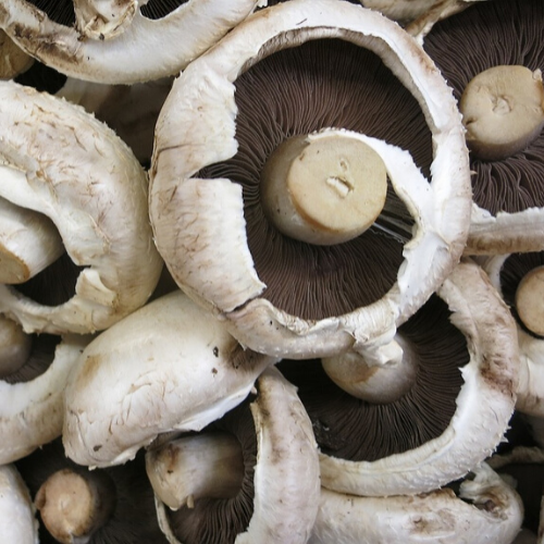 Harvest worker Mushrooms